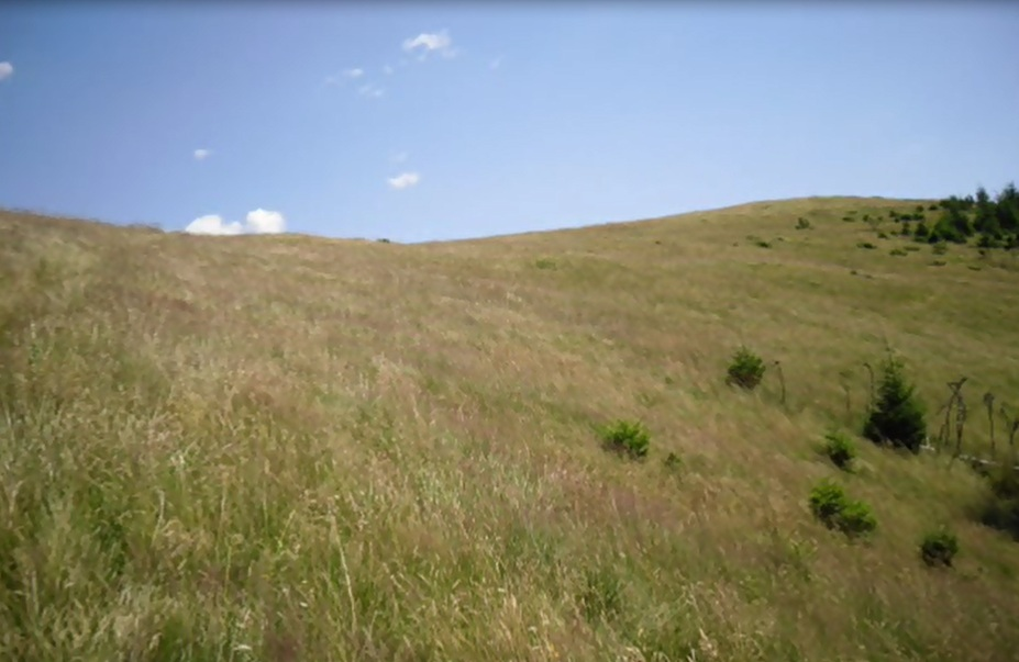 amenajari gradini -muntii Ceahlau 10