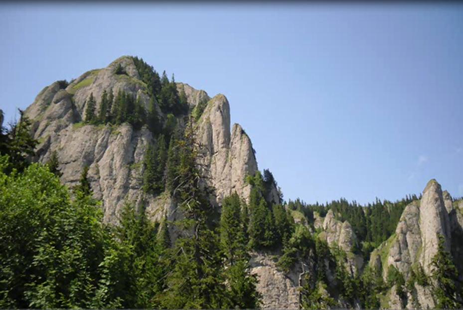 amenajari gradini -muntii Ceahlau 11