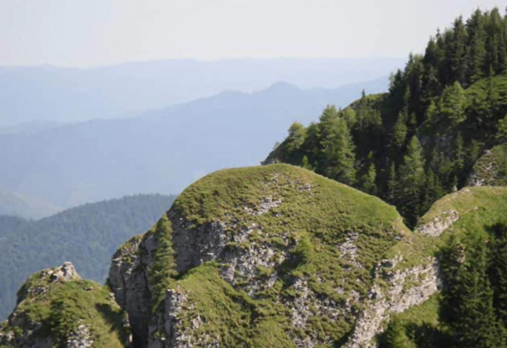 amenajari gradini -muntii Ceahlau 16