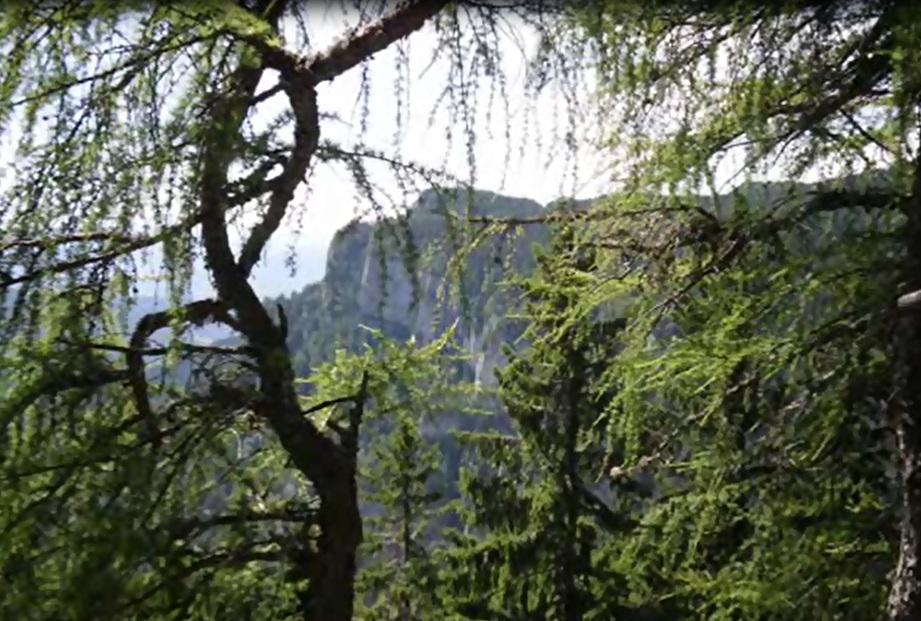 amenajari gradini -muntii Ceahlau 4