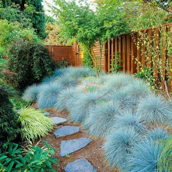 Ierburi decorative in gradina Plante decorative