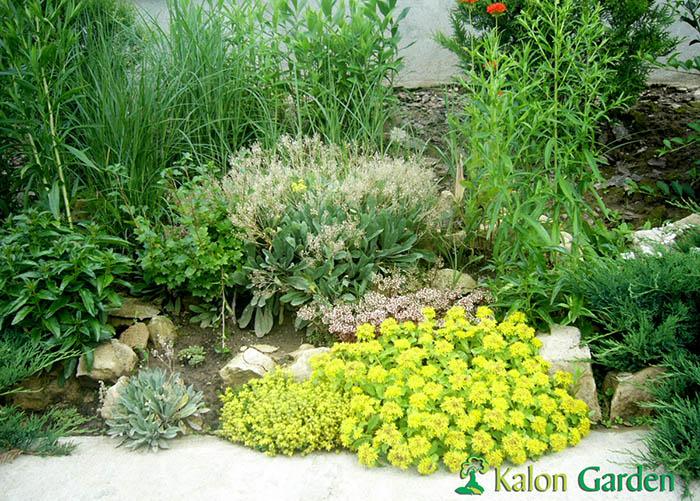 amenajare gradina cu plante decorative - Frida