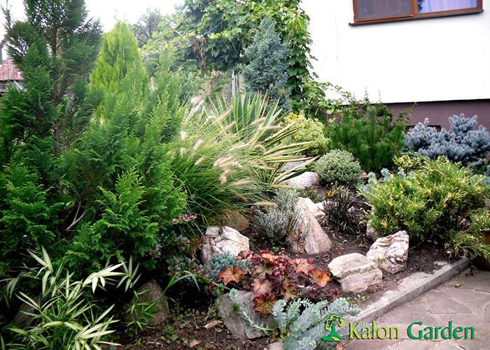 amenajri gradini cu plante decorative Cluj - Potra