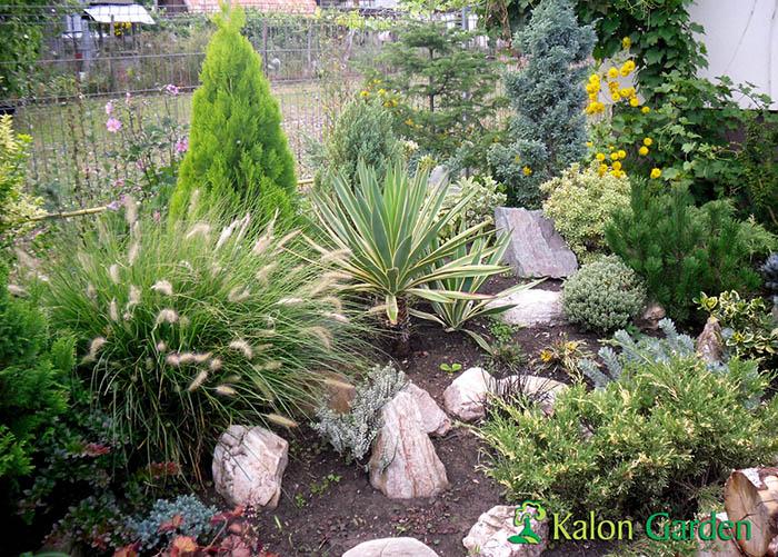 amenajare gradina cu plante decorative Cluj - Potra