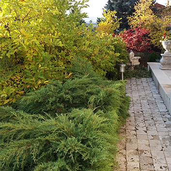 amenajare cu plante decorative gradina